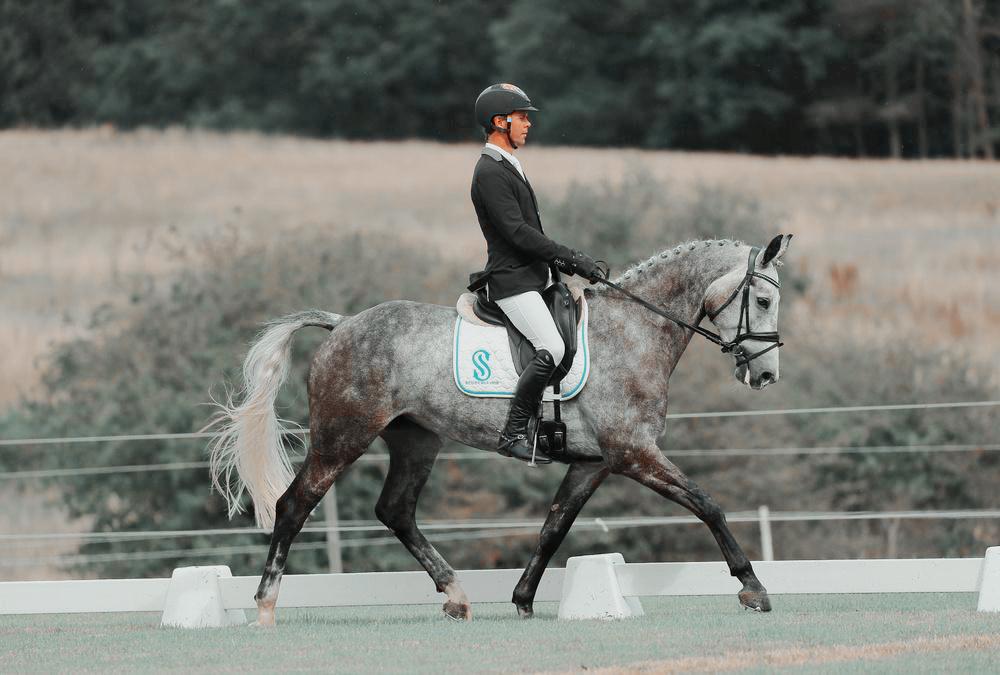 , Eventing Horses