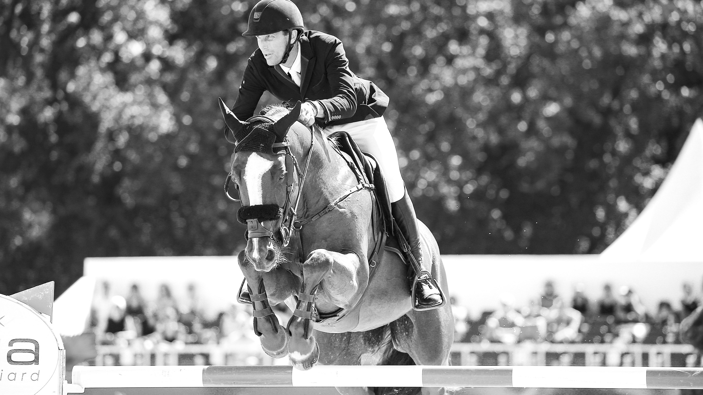 , Show Jumping Horses