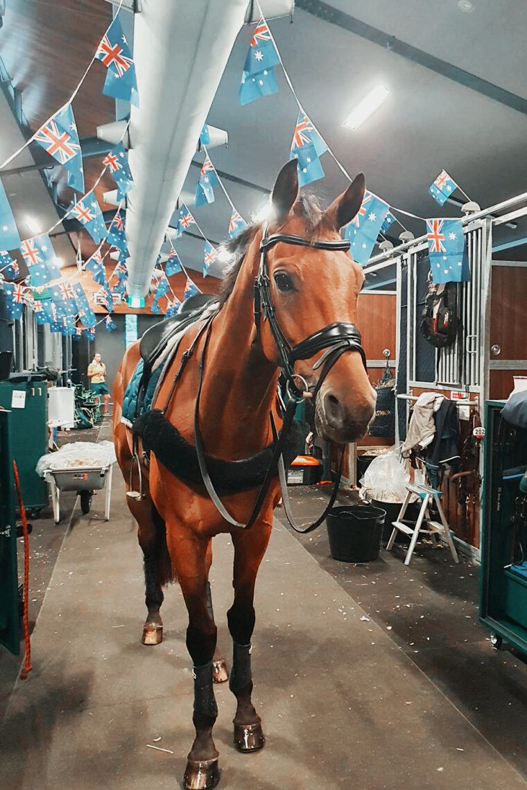 Scuderia 1918 Don Quidam at Olympic Games Tokyo 2020 2021 Backstage
